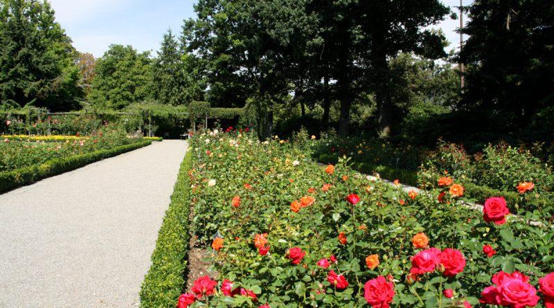Ботанический сад в Берне