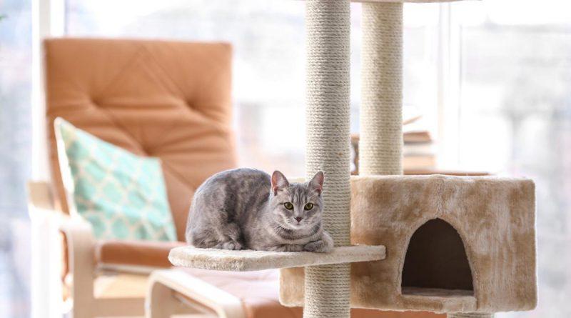Признаки хорошей мебели для кошек